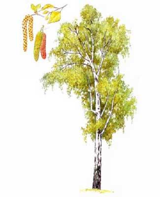 РАЗВИТИЕ РЕБЕНКА Строение Дерева Листья Деревьев
