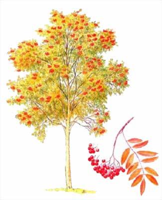 Осень листья ягоды